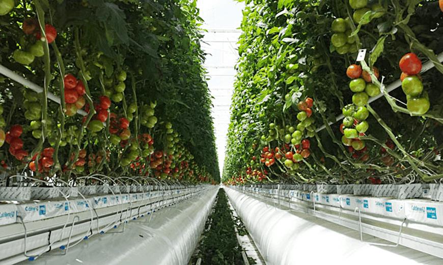 Greenhouse biofactory